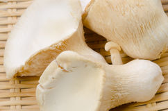 White king oyster mushroom Royalty Free Stock Photography