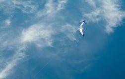 White kite under a blue sky Stock Photos
