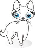 White kitten. Beautiful  blue eyes. Litlle cat Royalty Free Stock Photos