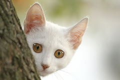 White kitten. Close up of the pretty white hiding kitten Stock Photo