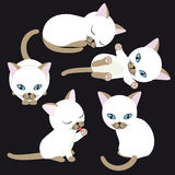 White kitten Stock Images