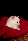 White kitten in basket Royalty Free Stock Photo