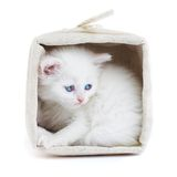 White kitten in a basket. Stock Photos