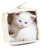 White kitten in a basket. Stock Photography