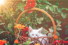 White Kitten in Basket and Roses Retro Stock Images