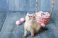 White kitten at blue wood. White funny kitten with pink wool ball and straw basket. Playful small cat at blue wood background Royalty Free Stock Photos