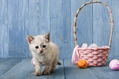 White kitten at blue wood. White funny kitten with pink wool ball and straw basket. Playful small cat at blue wood background Stock Photos