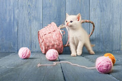 White kitten at blue wood. White funny kitten play with pink wool ball and straw basket. Playful small cat at blue wood background Stock Photo