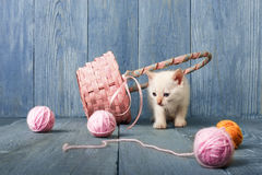 White kitten at blue wood. White funny kitten play with pink wool ball and straw basket. Playful small cat at blue wood background Royalty Free Stock Image