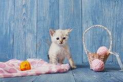 White kitten at blue wood. White kitten with pink wool ball and straw basket. Playful white kitten. Sweet adorable kitten on a serenity blue wood background Stock Image