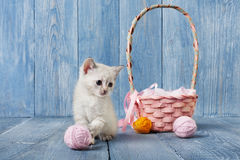 White kitten at blue wood. White kitten with pink wool ball and straw basket. Playful white kitten. Sweet adorable kitten on a serenity blue wood background Royalty Free Stock Image