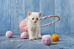 White kitten at blue wood. White kitten with pink wool ball and straw basket. Playful white kitten. Sweet adorable kitten on a serenity blue wood background Stock Photography
