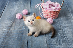 White kitten at blue wood. White kitten with pink wool ball and straw basket. Playful white kitten. Sweet adorable kitten on a serenity blue wood background Stock Photo