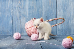 White kitten at blue wood. White kitten with pink wool ball and straw basket. Playful white kitten. Sweet adorable kitten on a serenity blue wood background Stock Photos