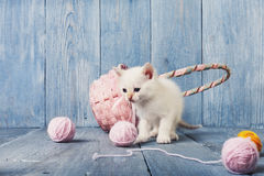 White kitten at blue wood. White kitten with pink wool ball and straw basket. Playful white kitten. Sweet adorable kitten on a serenity blue wood background Royalty Free Stock Photos