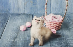 White kitten at blue wood. White kitten with wool ball and straw basket play at blue wood background. Small funny cat Stock Photography
