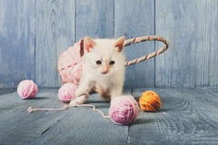 White kitten at blue wood. White kitten with wool ball and straw basket play at blue wood background. Small funny cat Stock Image