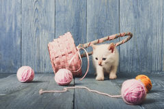 White kitten at blue wood. White kitten with wool ball and straw basket play at blue wood background. Small funny cat Royalty Free Stock Photos