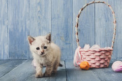 White kitten at blue wood Royalty Free Stock Photo