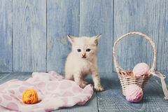 White kitten at blue wood. White kitten with wool ball and straw basket. Playful cat Royalty Free Stock Photography
