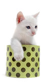 White kitten in a box Royalty Free Stock Image