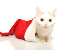 White kitten in christmas cap Stock Photo