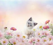 White kitten in the flower garden. Little white kitten in the flower garden Royalty Free Stock Photography