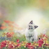 White Kitten in Flowers Royalty Free Stock Images