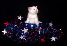 White kitten and Fourth of July Royalty Free Stock Images