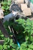 White Kitten in the Garden Royalty Free Stock Photo