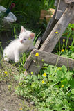White Kitten in the Garden Stock Images