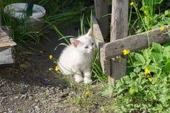 White Kitten in the Garden Stock Photography