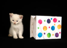 White kitten and gift bag Royalty Free Stock Images
