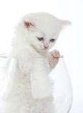 White kitten in  glass Stock Photos
