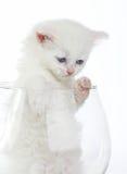 White kitten in glass stock photos