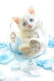 White kitten in a glass Royalty Free Stock Photo