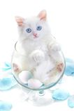 White kitten in a glass royalty free stock photography