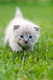 White kitten on the grass. Selective focus Stock Images
