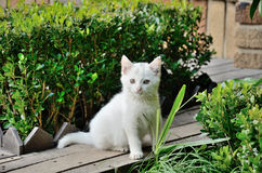 White Cat. White kitten in the grass Royalty Free Stock Photos