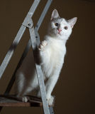 White kitten with gray spots is sitting on ladder Royalty Free Stock Images