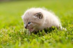 White kitten on a green lawn Stock Image