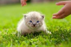 White kitten on a green lawn Stock Photos