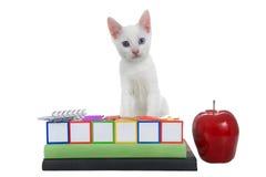 White kitten with heterochromia eyes back to school blocks books stock image