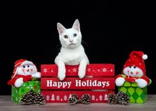 White kitten with heterochromia peaking over side of a red Happy Holidays box Royalty Free Stock Images