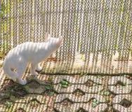 White kitten Stock Photos