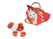 White Kitten In Red Package And White Round Box Royalty Free Stock Photos