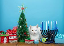White kitten laying between Christmas and Hanukkah decorations royalty free stock photo