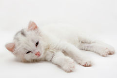 White kitten Stock Photos