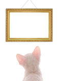 White Kitten Looking At Empty Frame Royalty Free Stock Images