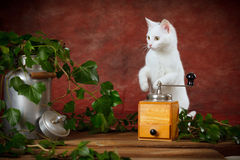 White kitten between milk can and coffee grinder Stock Image